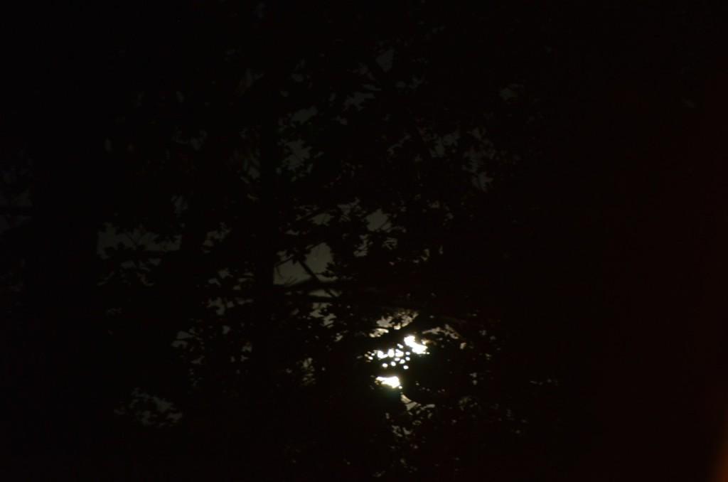 Low Moon Through Trees John Doan Concert