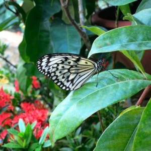25.2 Penang, Malaysia Butterfly Park John Doan