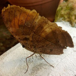 25.6 Penang, Malaysia Butterfly Park John Doan